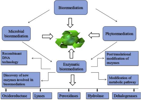 Types of bioremediation