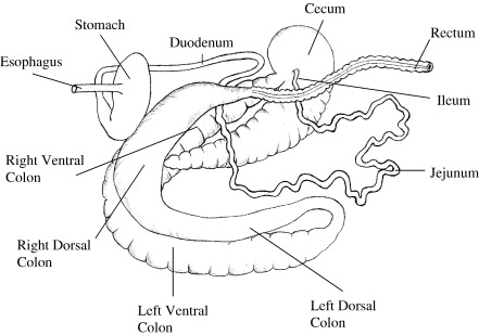 Passage rate of digesta through the equine gastrointestinal tract: A ...