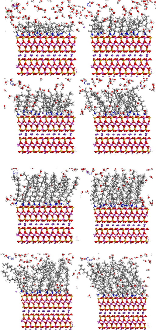 Molecular Dynamics Simulation Of Primary Ammonium Ions With