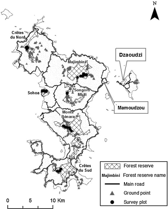 Characterization Of The Horizontal Structure Of The Tropical Forest