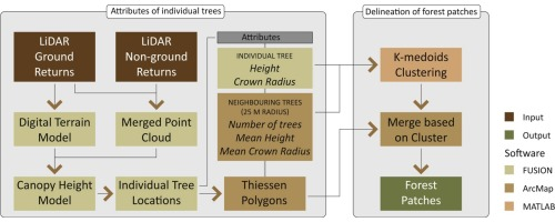 Structural attributes of individual trees for identifying