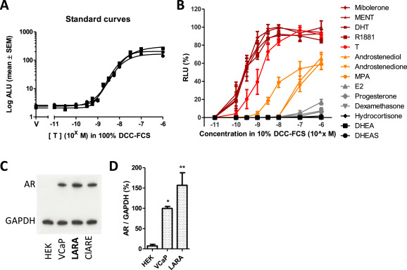 Effects of sex hormone-binding globulin (SHBG) on androgen