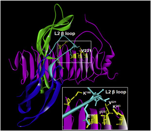 Functional characterization of two naturally occurring
