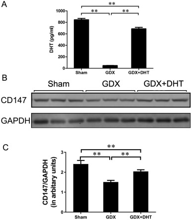 The role of extracellular matrix metalloproteinase inducer