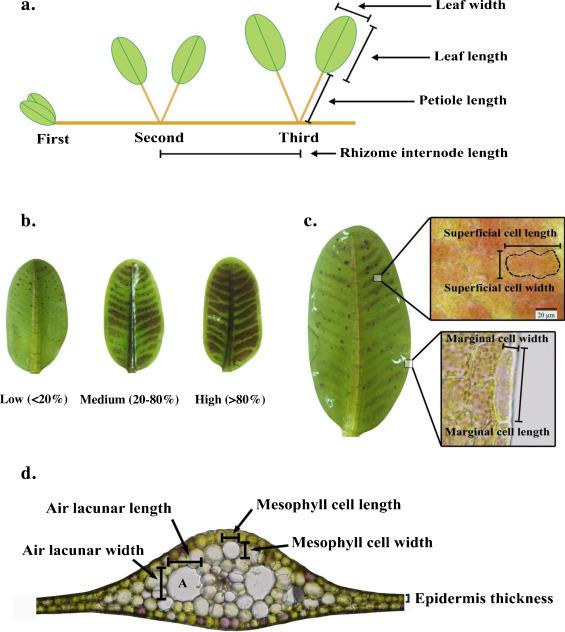 The effect of habitats, densities and seasons on morphology, anatomy ...