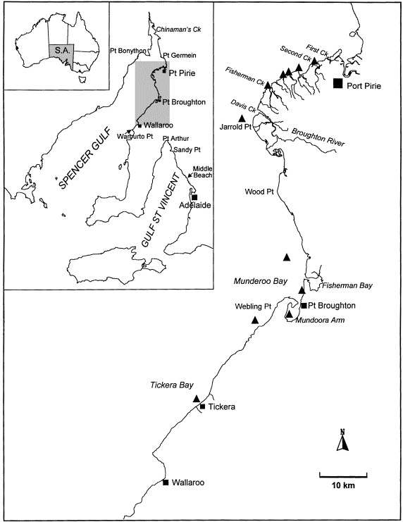 Large Scale Seagrass Dieback In Northern Spencer Gulf South