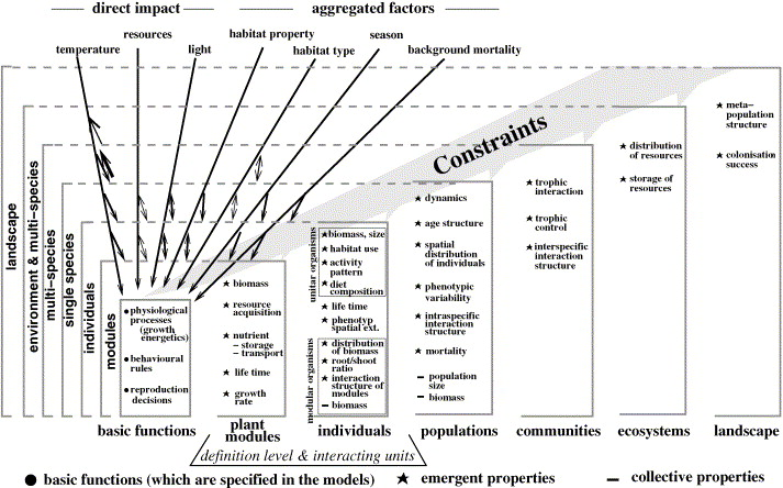 The Concepts Of Emergent And Collective Properties In Individual