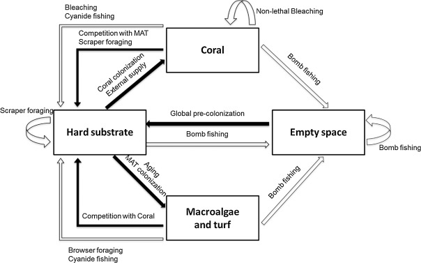 SEAMANCORE: A spatially explicit simulation model for assisting the