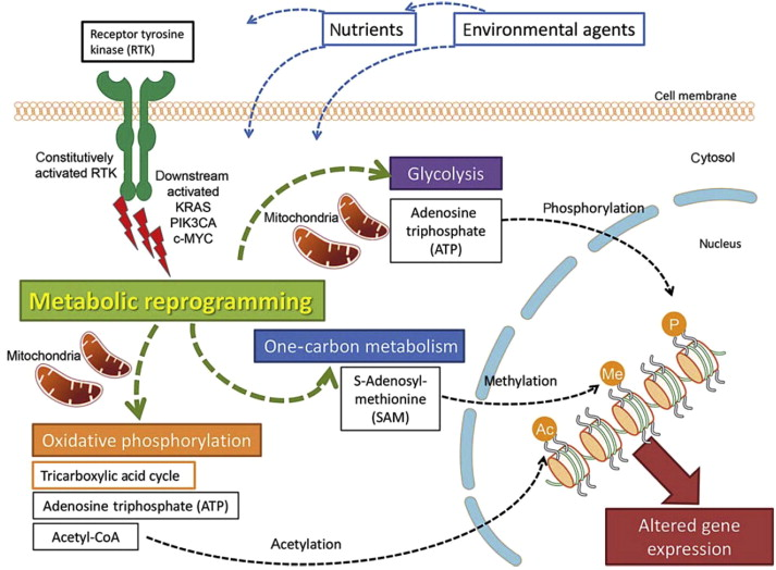 Cellular Metabolism In Colorectal Carcinogenesis Influence Of Lifestyle Gut Microbiome And Metabolic Pathways Sciencedirect