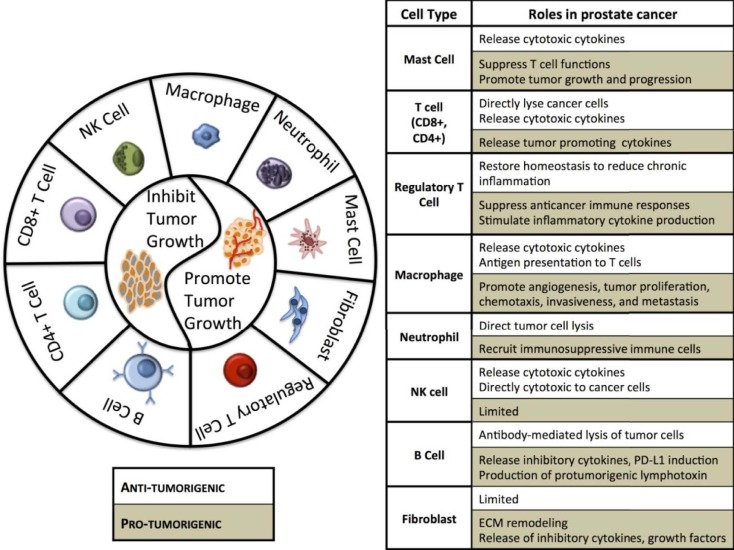 prostate cancer cell types