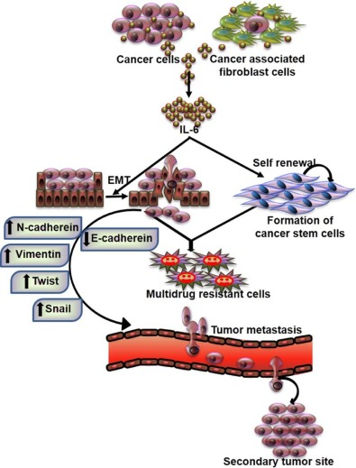 Cancer development, chemoresistance, epithelial to