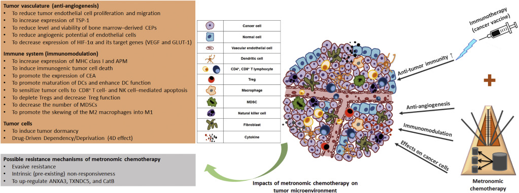 Metronomic chemotherapy and immunotherapy in cancer