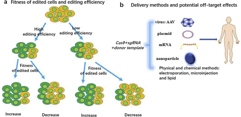 CRISPR-Cas9 for cancer therapy: Opportunities and challenges