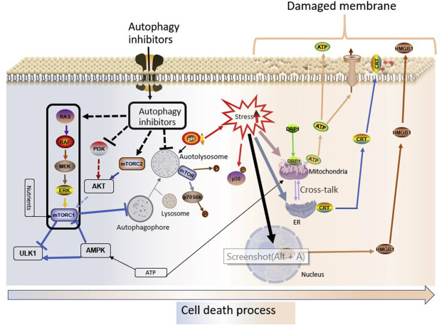 Autophagy Regulation As A Promising Approach For Improving Cancer