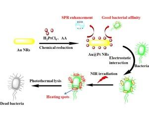 pathogenic properties of bacteria