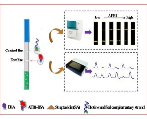 Dual-competitive lateral flow aptasensor for detection of