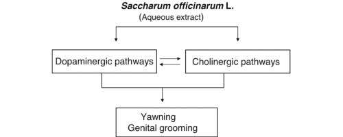 prenatal testing for schizophrenia