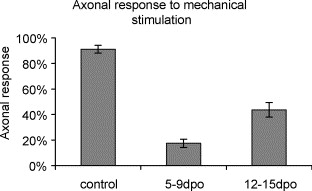 Pain behavior and nerve electrophysiology in the CCI model of