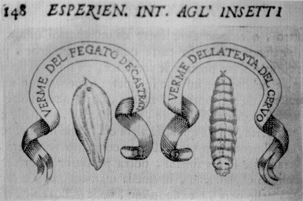 Makmiror o nemozol a lyambliya - Quello che promuove leliminazione di parassiti da un organismo