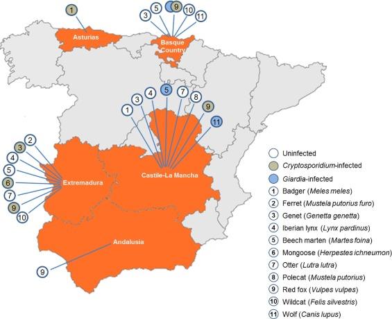 giardiasis eurolab rossz lehelet, mit segít a gyógyszer