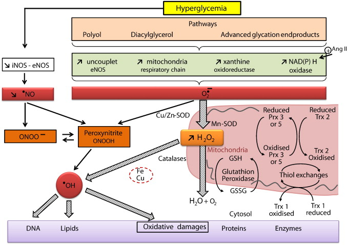 Diabetes, oxidative stress and therapeutic strategies