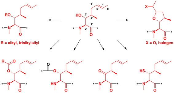 Semi synthesis of cyclosporins ScienceDirect