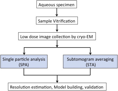 Cryo-electron microscopy for structural analysis of dynamic