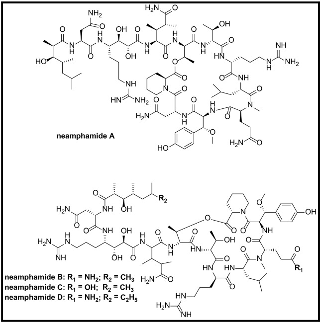 Marine natural product peptides with therapeutic potential