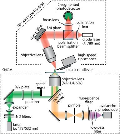 High-speed near-field fluorescence microscopy combined with