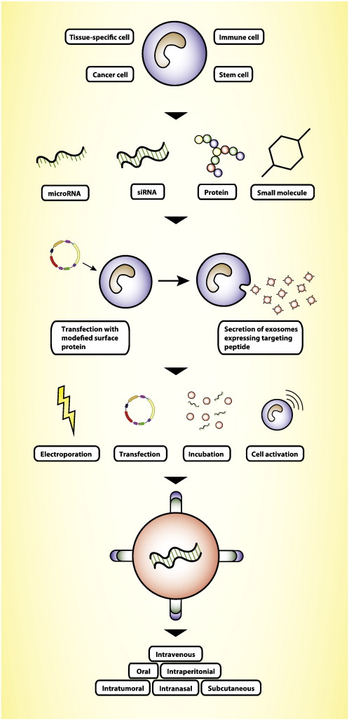 components of successful drug delivery