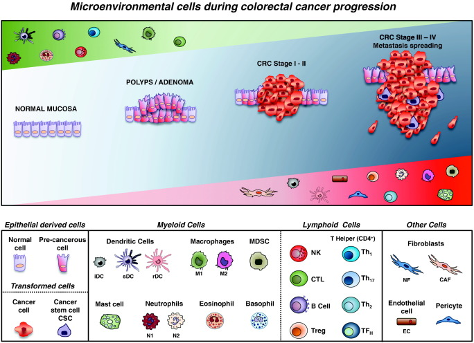 Friend Or Foe The Tumour Microenvironment Dilemma In Colorectal Cancer Sciencedirect
