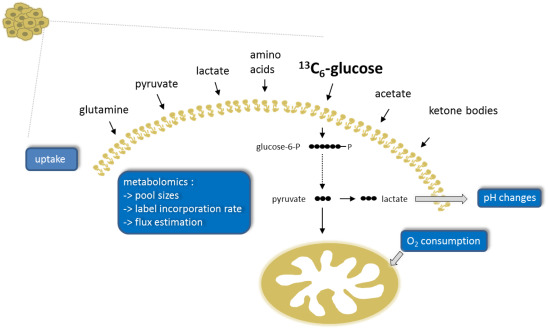 Approaches and techniques to characterize cancer metabolism