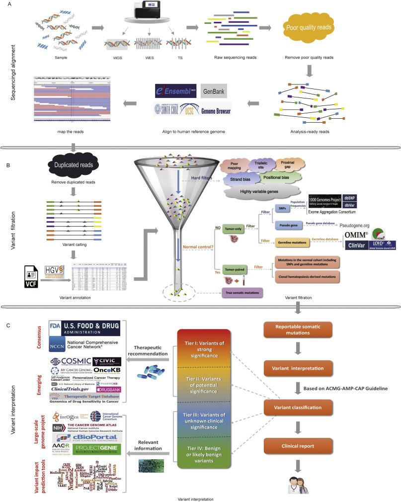 Comprehensive elaboration of database resources utilized in next