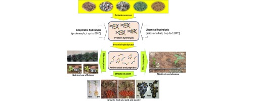 Protein hydrolysates as biostimulants in horticulture