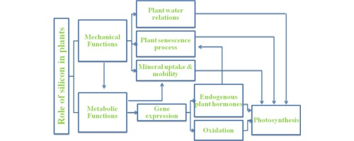 Biostimulant activity of silicon in horticulture - ScienceDirect