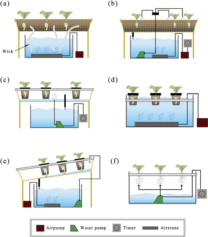 Beneficial bacteria and fungi in hydroponic systems: Types