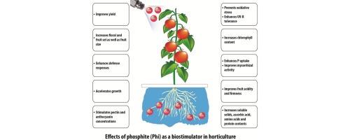 Biostimulant activity of phosphite in horticulture