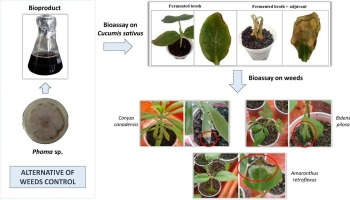 Formulation of a bioherbicide with metabolites from Phoma sp. -  ScienceDirect