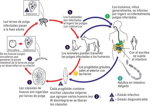 Identificar correctamente las barreras de infección indicadas en los seres humanos.