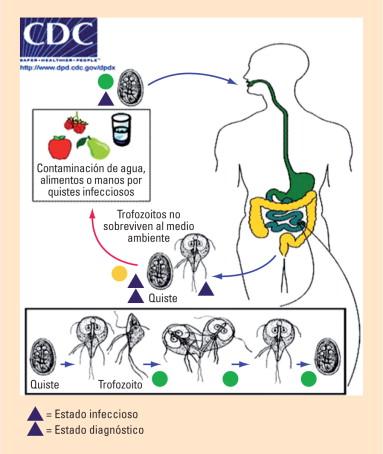 Giardia duodenalis cdc