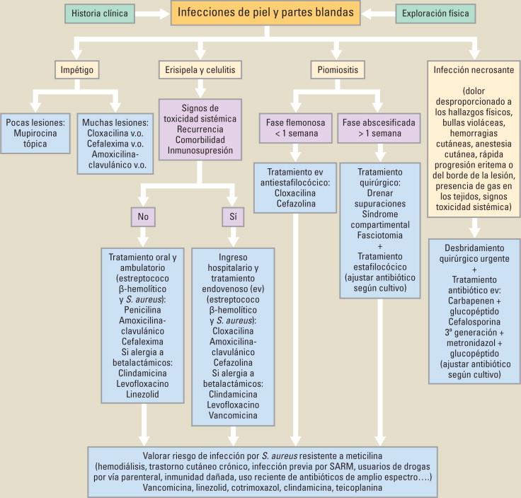 dosis de cefalexina para infección de la piel
