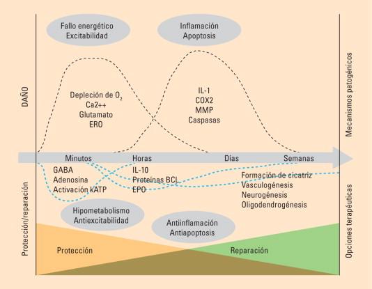 Significado del proceso intracraneal