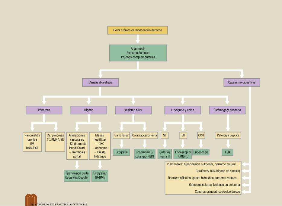 Que organos se encuentran en el hipocondrio derecho pdf