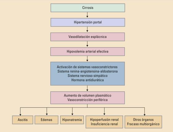 Sistema portal del riñón