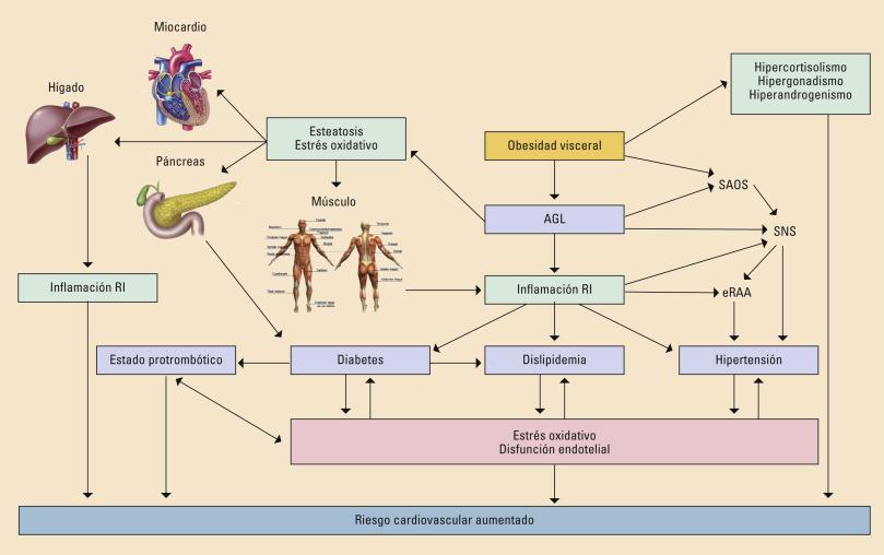 Disfunción adipocitaria e hipertensión
