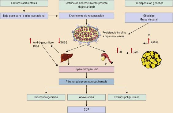 papel de autocontrol de la diabetes tipo 2 de la autoeficacia de la dieta