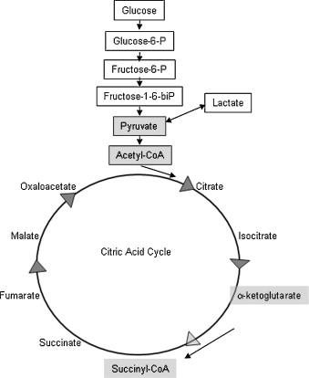 Thiamine Supplementation Increases Serum Thiamine And Reduces