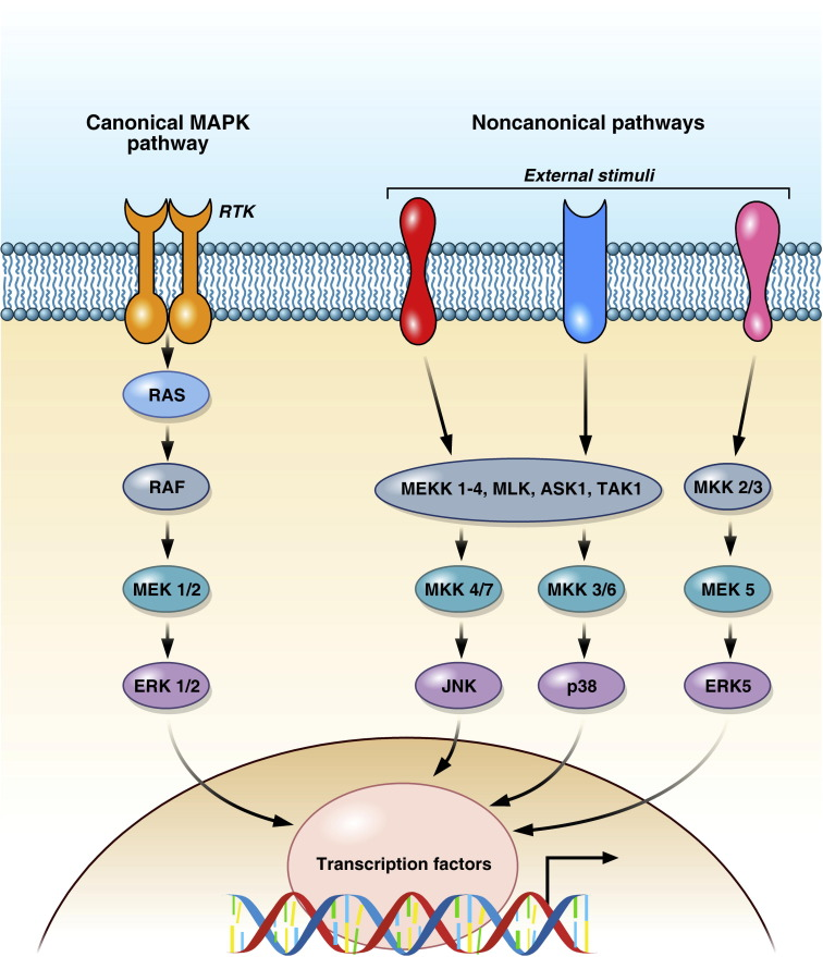 Cancer Resistance To Therapies Against The Egfr Ras Raf