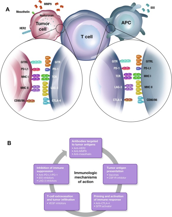 Evolution of checkpoint inhibitors for the treatment of