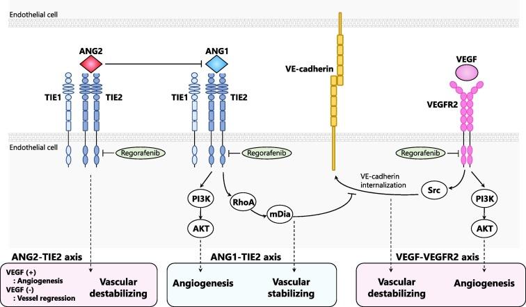 Molecular Insight Of Regorafenib Treatment For Colorectal Cancer Sciencedirect